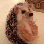 Mohair and needle felted hedgehog